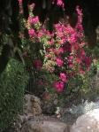 Flowers in Bet Shemesh