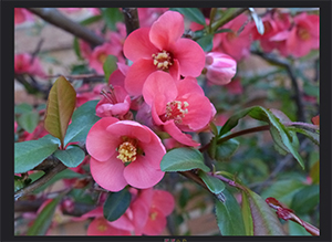 Spring Flowers mini